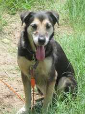 Mutt Dog For Adoption in Raleigh, NC, USA