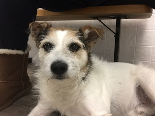 Mutt Dog For Adoption in Minneapolis, MN