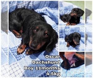 Puppyfinder com: Dachshund dogs for adoption near me in Seattle