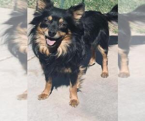 Chion Dogs for adoption in Santa Clarita, CA, USA