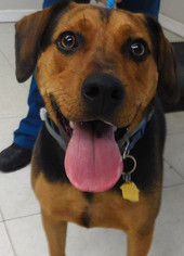 Mutt Dog For Adoption in Fredericksburg, VA, USA
