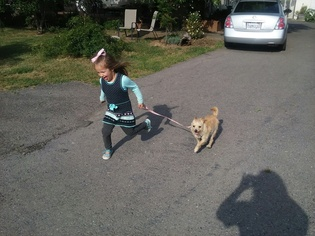 Mutt Dog For Adoption in VACAVILLE, CA