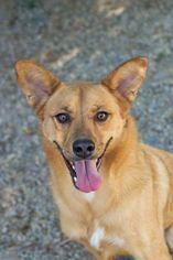 Mutt Dog For Adoption in Salt Lake City, UT