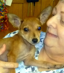 Chihuahua Mix Dog For Adoption in Livingston, TX, USA