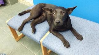 Mutt Dog For Adoption in Royal Palm Beach, FL