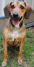 Mutt Dog For Adoption in Boston, MA
