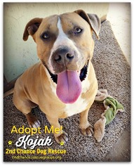 Bullboxer Pit Dog For Adoption in Queen Creek, AZ, USA