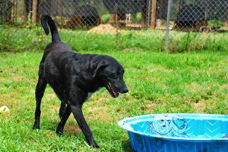 Golden Retriever Mix Dog For Adoption in Elizabeth City, NC, USA