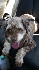 Mutt Dog For Adoption in Etters, PA, USA