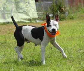 Mutt Dog For Adoption in Sanford, FL