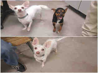 View Ad Mutt Dog For Adoption Colorado Brighton Usa