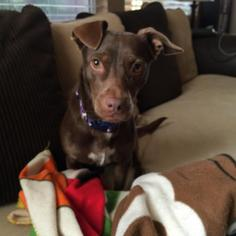 Mutt Dog For Adoption in Los Banos, CA, USA