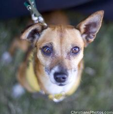 Mutt Dog For Adoption in Marina del Rey, CA, USA