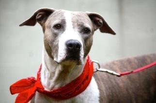 Mutt Dog For Adoption in Miami, FL