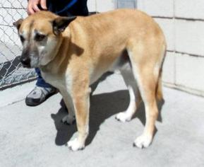 Mutt Dog For Adoption in Millville, UT, USA