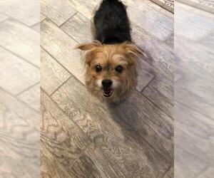 Mutt Dogs for adoption in Nashville, TN, USA