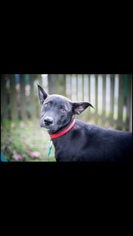 Mutt Dog For Adoption in Little Rock, AR