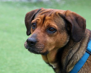 Mutt Dog For Adoption in Asheville, NC, USA