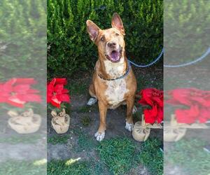 Mutt Dogs for adoption in Apple Valley, CA, USA