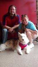 Siberian Husky Dogs for adoption in Sanford, FL, USA