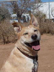 Mutt Dog For Adoption in Las Cruces, NM