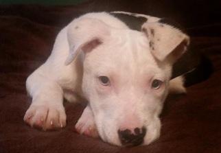 Mutt Dog For Adoption in Anniston, AL