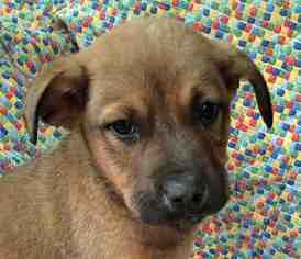 Mutt Dog For Adoption in Tyler, TX