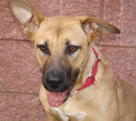 Mutt Dog For Adoption in Oxford, MS, USA