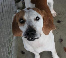Mutt Dog For Adoption in Hilton Head, SC