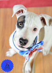 Mutt Dog For Adoption in Bradenton, FL, USA