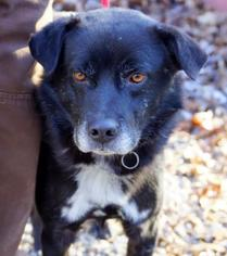 Mutt Dog For Adoption in Frenchburg, KY, USA