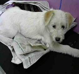 View Ad: Jacairn Dog for Adoption near Texas, Missouri City