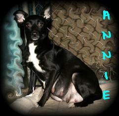 Mutt Dog For Adoption in Covington, LA, USA