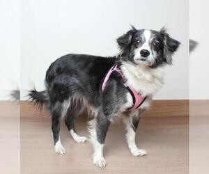 Chion Dogs for adoption in Eden Prairie, MN, USA