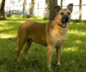 Mutt Dog For Adoption in Santa Fe, TX, USA