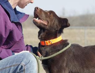 Labrador Retriever Mix Dog For Adoption in Valley Falls, KS