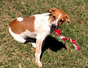 Mutt Dog For Adoption in Houston, TX, USA
