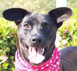 Mutt Dog For Adoption in San Francisco, CA, USA