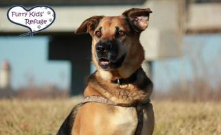 Mutt Dog For Adoption in Lee's Summit, MO, USA
