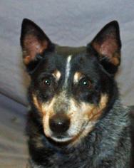 Mutt Dog For Adoption in Modesto, CA
