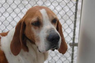 Mutt Dog For Adoption in Crossville, TN, USA