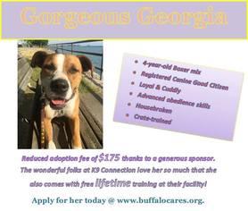 Boxer Mix Dog For Adoption in Tonawanda, NY