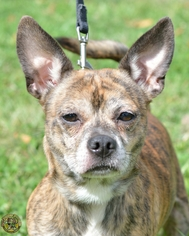 Mutt Dog For Adoption in Mt Vernon, IN, USA