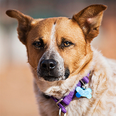 Mutt Dog For Adoption in Kanab, UT, USA