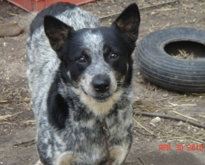 Mutt Dog For Adoption in Remus, MI