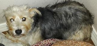 Mutt Dog For Adoption in Wagoner, OK