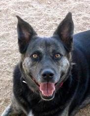 Mutt Dog For Adoption in Los Angeles, CA, USA