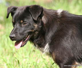 Mutt Dog For Adoption in Tyler, TX, USA