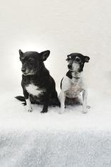 Mutt Dog For Adoption in Weston, FL, USA