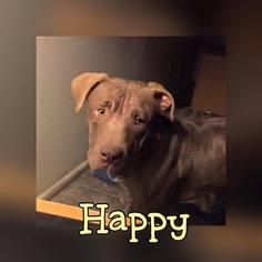 Mutt Dog For Adoption in Phoenix, AZ, USA